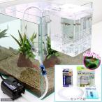 (熱帯魚)外掛式産卵飼育ボックス サテライトS スターターセット 国産ミックスグッピー 1ペア 付 本州・四国限定