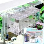 (熱帯魚)外掛式産卵飼育ボックス サテライトL スターターセット 国産ミックスグッピー 1ペア 付 本州・四国限定