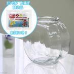 おしゃれなガラス製金魚鉢 太鼓鉢 中(3.8リットル) エンゼル 色揚げのおまけ付き 関東当日便