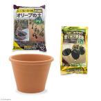 花ごころ オリーブの土+オリーブの肥料+デローマ バッサム 直径31cm×23cm セット お一人様5点限り