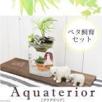 (熱帯魚)(水草)私のアクアリウム アクアテリア P110 ベタ飼育セット(生体・植物・ヒーター付き)おしゃれ水槽セット 本州四国限定
