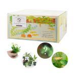 (めだか)(水草)私のアクアリウム アクアテリア N190 メダカ飼育セット(生体・植物付き)おしゃれ水槽セット 本州四国限定
