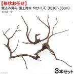 形状お任せ 煮込み済み 極上流木 Mサイズ(約20〜30cm)3本セット お一人様2点限り