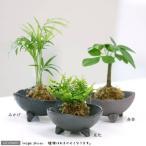 (観葉植物)苔玉 おまかせ観葉 Ver.水苔(5個) コケ玉