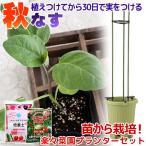 (観葉)私の菜園 秋ナス 苗から栽培セット(楽々菜園プランター 6点セット) 家庭菜園