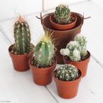 観葉植物 おまかせプチサボテン 3cm硬質ポット植え 3ポット