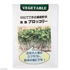 (観葉)種 スプラウト ブロッコリー(1袋) 家庭菜園