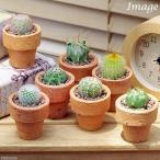(観葉)おまかせプチサボテン 手作りテラコッタ鉢植え(お買い得3鉢セット)(説明書付き)