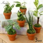 (観葉)テラコッタプランツ ミニ おまかせ観葉植物(お買い得3鉢セット)