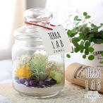 (観葉植物)ボトルテラリウム作成キット ドライフラワー&ティランジア ジュエル付き(1セット)