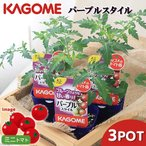 Yahoo!チャーム charm ヤフー店(観葉)カゴメ 野菜苗 トマト パープルスタイル 3号(3ポットセット) 家庭菜園