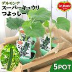 (観葉植物)緑のカーテン デルモンテ 野菜苗 スーパーキュウリ つよっしー 3号(5ポット) 家庭菜園
