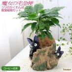 (観葉植物)ジブリプランターカバー 魔女の宅急便 ジジのかくれんぼ 観葉植物セット(コーヒーの木)(1セット) 北海道冬季発送不可