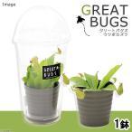 (食虫植物)グリートバグズ ウツボカズラ(カップ入り)(1鉢)