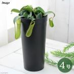 (食虫植物)ウツボカズラ ネペンテス ルイーザ 4号(1鉢)