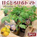 (観葉植物)パナプラス 野菜苗 トマト 甘くとろけるトマト つやぷるんゴールド 3号(3ポット) 家庭菜園