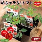観葉植物 デルモンテ 野菜苗 トマト めちゃラク トマト 赤色ミニトマト 3号 1ポット 家庭菜園