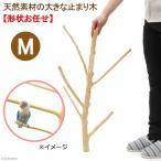 天然素材の大きな止まり木 M 土台なし フィリピン産天然木 形状おまかせ お一人様4点限り