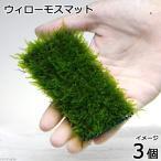 (水草)育成済 ウィローモスマット(無農薬)(3個) 北海道航空便要保温