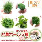 (水草 熱帯魚)置くだけ簡単 水草ボール(無農薬)5種セット