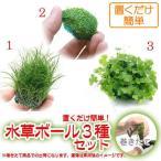 (水草 熱帯魚)置くだけ簡単 水草ボール(無農薬)3種セット