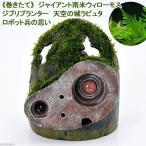 (水草)ジブリプランター 天空の城ラピュタ ロボット兵の思い ジャイアント南米ウィローモス付 1体
