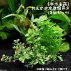 (水草)半水中葉 おまかせ水草 鉛巻き(無農薬)(3個セット) 北海道航空便要保温
