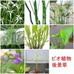 (ビオトープ/水辺植物)おまかせ水辺植物 後景草5種セット