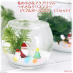(水草)私の小さなアクアリウム 〜小さなクリスマス〜(バブルボールSS)(1セット) 本州・四国限定