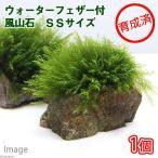 (水草)育成済 ウォーターフェザー付 風山石 SSサイズ(5〜7cm)(無農薬)(1個)