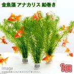 (水草)メダカ・金魚藻 アナカリス 鉛巻き(7〜10本)(1個) 北海道航空便要保温