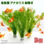 (水草)メダカ・金魚藻 アナカリス 鉛巻き(7〜10本)(3個) 北海道航空便要保温