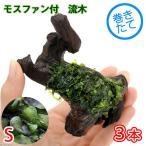 (水草)巻きたて モスファン付 流木 Sサイズ(7〜12cm)(無農薬)(3本)