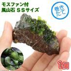 (水草)巻きたて モスファン付 風山石 SSサイズ(5〜7cm)(無農薬)(1個)