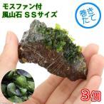 (水草)巻きたて モスファン付 風山石 SSサイズ(5〜7cm)(無農薬)(3個)