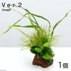 (水草)Plants Arrangement ザ ボンサイ Ver.2(1個) 北海道航空便要保温