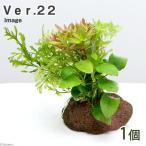 (水草)Plants Arrangement ザ ボンサイ Ver.22(1個) 北海道航空便要保温