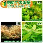 (水草 熱帯魚)初めての水草 有茎草(水中葉) 750円 3種(1パック)説明書付