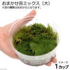 (水草/苔)テラ向け おまかせ苔ミックス カップ大(1パック分) 北海道航空便要保温