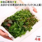 (水草 熱帯魚)1000円 初心者向けおまかせ水草詰め合わせパック 4種(水上葉)(無農薬)(1パック) 北海道航空便要保温