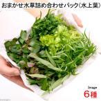 (水草)おまかせ水草詰め合わせパック 6種(水上葉)(無農薬)(1パック)