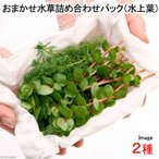 (水草 熱帯魚)おまかせ水草詰め合わせパック 2種(水上葉)(無農薬)(1パック) 北海道航空便要保温