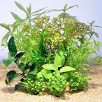 (水草)置くだけ簡単 ライフマルチ(茶) 初心者向けレイアウトセット 20〜30cm水槽用 6種(水上葉)(1セット)