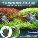 (水草)おまかせ水上葉 レイアウトセット 60cm水槽用 8種+Cry.パルヴァ(2ポット)(水草説明書付)
