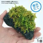 (観葉/苔)テラ向け ハイゴケ付溶岩石 Sサイズ(約8〜10cm)(1個)