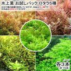 (水草)水上葉 お試しパック ロタラ5種 各3本(無農薬)(計15本)(1パック分) 北海道航空便要保温