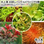 (水草)水上葉 お試しパック ルドウィジア5種 各3本(無農薬)(計15本)(1パック分)