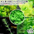 (水草)水上葉 お試しパック バコパ5種 各3本(無農薬)(計15本)(1パック分) 北海道航空便要保温