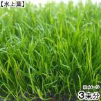 (水草)コブラグラス モーリシャス(水上葉)(無農薬)(3束分)