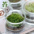 (観葉)苔Terrarium ヤマゴケ フラットシャーレ  説明書付 テラリウムキット 本州・四国限定